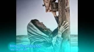 Bông Hồng Dâng Mẹ   Mai Thiên Vân [Thánh Ca]