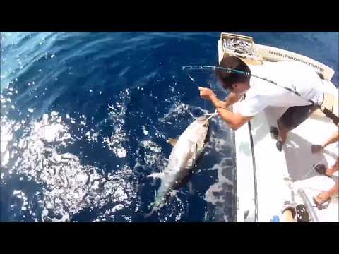 Il russo che pesca in 3 Akhtuba su che prendere una pesce gatto