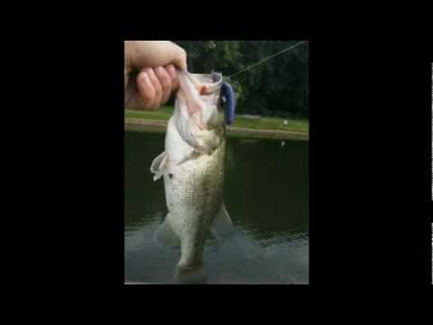 Bass Fishing at Local Pond | Ep.1
