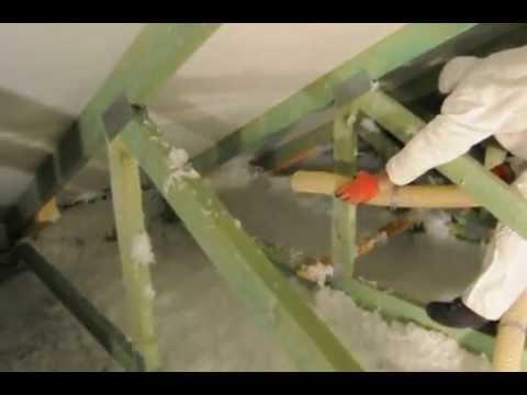 Bika szalagféreg mérete