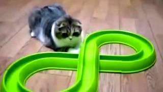 Приколы с котятами,подборка
