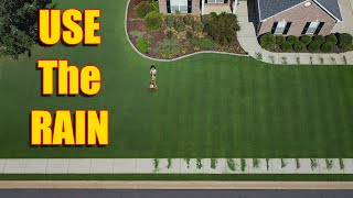 Summer Lawn Care - Use The Heavy Rains