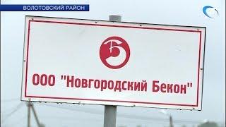 В четырех районах Новгородской области введен карантин по АЧС