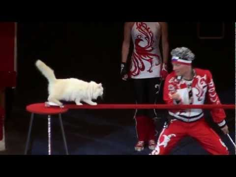 Russian Circus Cats are Amazing