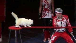Дрессура с кошками - Федоровы (2011)