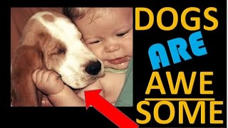 Dog lovers will Smile after seeing this 1 Min Video :)