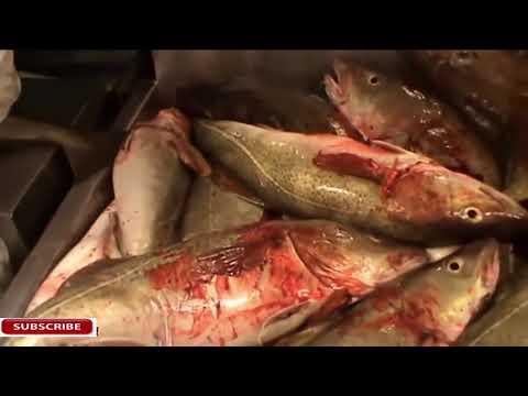 Pesca dincidente