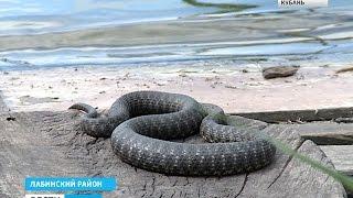 Рыбалка в тимашевск краснодарский край википедия