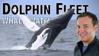 Best Whale Watching Cape Cod - Dolphin Fleet Review & Pilgrim Monument