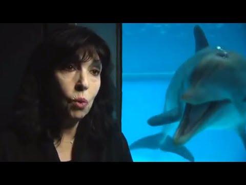 dolphin bonk