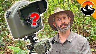 Camera Trap Catches Rare Animal!