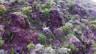 Chamorga trekking Tenerife undiscovered