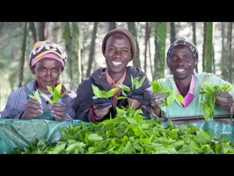 Welcome to Fairtrade: Meet the farmers and workers