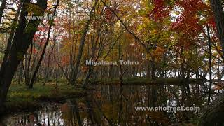 沼地の動画素材, 4K写真素材