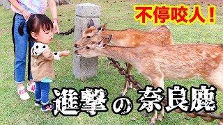 進擊的奈良鹿 不停咬人![粵語中字]日本關西 奈良公園 Japan Nara Park Deer Attack