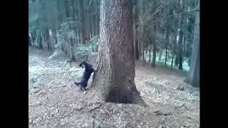 Lovkyně veverek