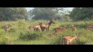 preview picture of video 'Lake Mburo game drive'