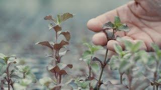 Découvrez la start-up Bio Inspir'