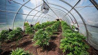 $6.5M worth of marijuana seized north of Toronto - Canada Info