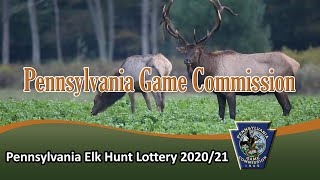 Pennsylvania Elk Hunt Lottery 2020/21