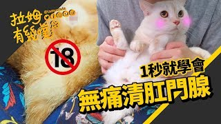 The easy way to help cats clean the anal sac|LAMUNCATS ♤