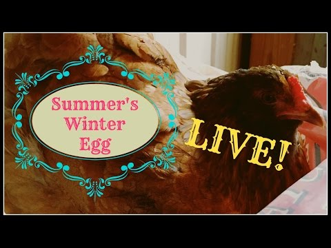 Summer's Winter Egg~Laid Live!