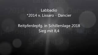 video of Labbadio