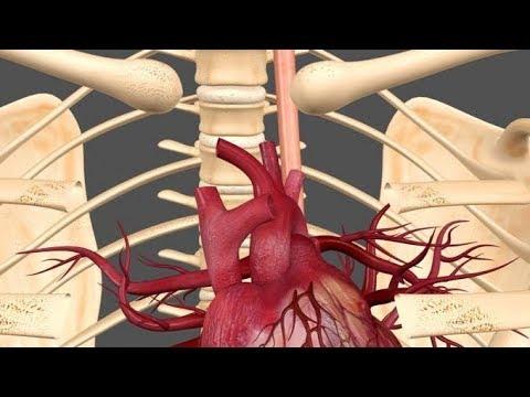 Ciśnienie tętnicze ciśnienie krwi