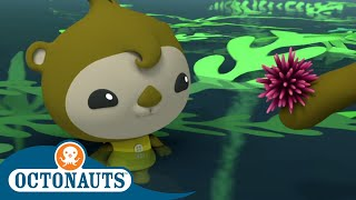Octonauts - Periwinkle | Cartoons For Kids | Underwater Sea Education