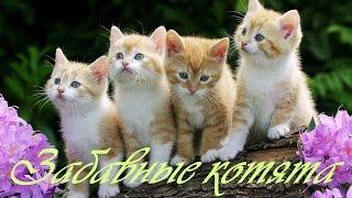 Забавные котята