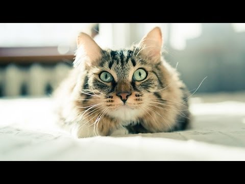 How to Train a Cat to Come When Called   Cat Care