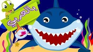 اغنية بيبي القرش بالعربي - بيبي شارك بالعربي -😘👍😍 Baby Shark Arabic