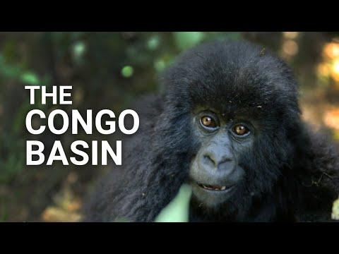 Conserving Forests - Congo Basin Forest: a Super Solution