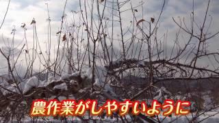 【剪定(せんてい)】りんご農作業の最初の仕事【りんご大学HP】