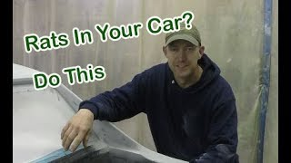 Keeping rodents out of your car