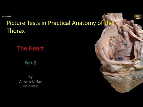Test obrazkowy z anatomii klatki piersiowej - serce (część 2)