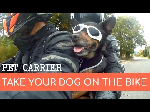 Affordable Motorcycle Pet Carrier For Dogs