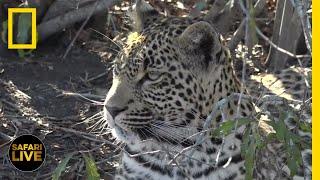 Safari Live - Day 253 | National Geographic