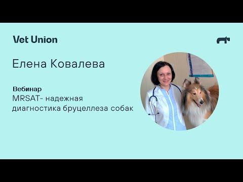 Диагностика бруцеллеза собак