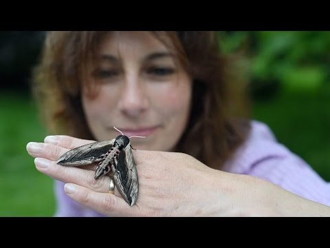 The Laboratory with Leaves (Part 9): Moths