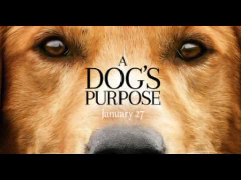 Home we'll go - Walk off the Earth ( A dog's purpose )