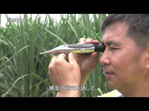 台糖本土二砂製造流程_日文版