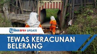 Bakar Sarang Lebah, 3 Warga di NTT Malah Tewas Keracunan Belerang