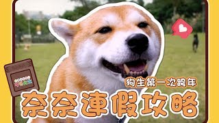【阿楞奈奈不汪此生#1】奈奈的連假攻略?!狗生第一次跨年?!