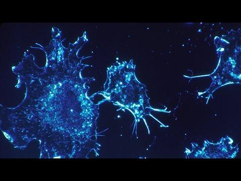 Imitación de la naturaleza para las enfermedades: detección y destrucción - Profesor Hugh Barr