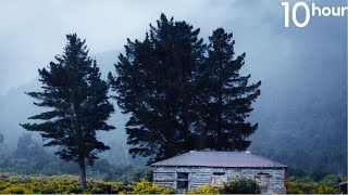10hrs of RAIN in New Zealand Countryside, Gentle Rain Sounds to Sleep, Relax, Study | Binaural Rain