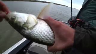 Астрахань рыбалка в дельте волги
