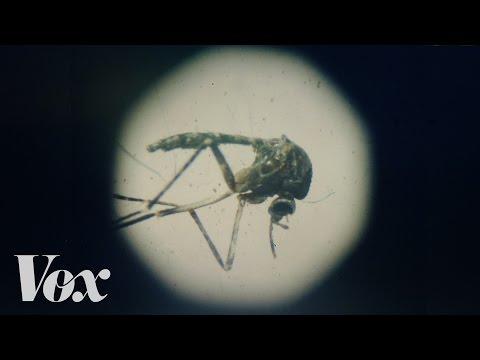 Video The Zika virus, explained