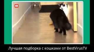 МЕГА ПОДБОРКА ПРИКОЛОВ С КОШКАМИ! Смешное видео про котов! Лучшие видео приколы про кошек! 2014