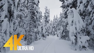 4K Winter Hike through Snowy Forest with Snow Crunch Sound - Scenic Trails of Canada - Part #2